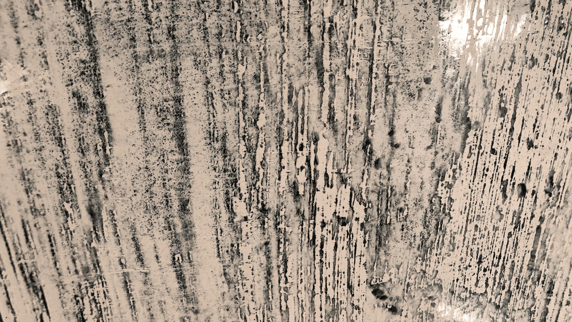 Venetian plaster Sydney
